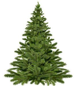 christmas-tree-1792267_1280